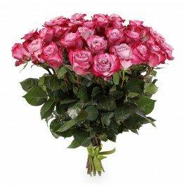 Роза пурпурная 41 штук